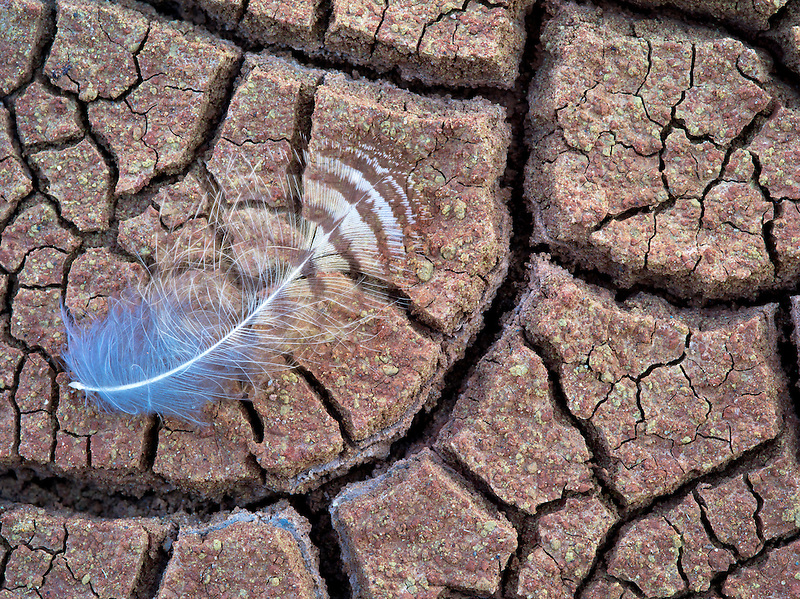 Close up of feather in cracked mud. John Day Fossil Beds National Monument. Oregon
