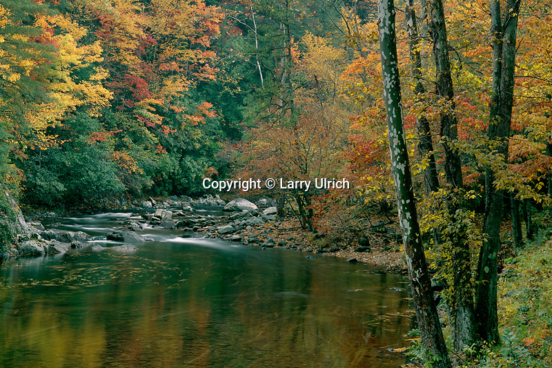 Autumn hardwood forest<br /> Little River<br /> Great Smoky Mountains National Park<br /> Tennessee