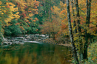 Autumn hardwood forest<br />