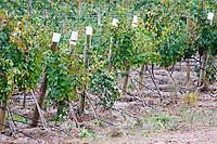 Vineyards. Herdade da Malhadinha Nova, Alentejo, Portugal