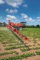 Spraying sugar beet - Norfolk, June