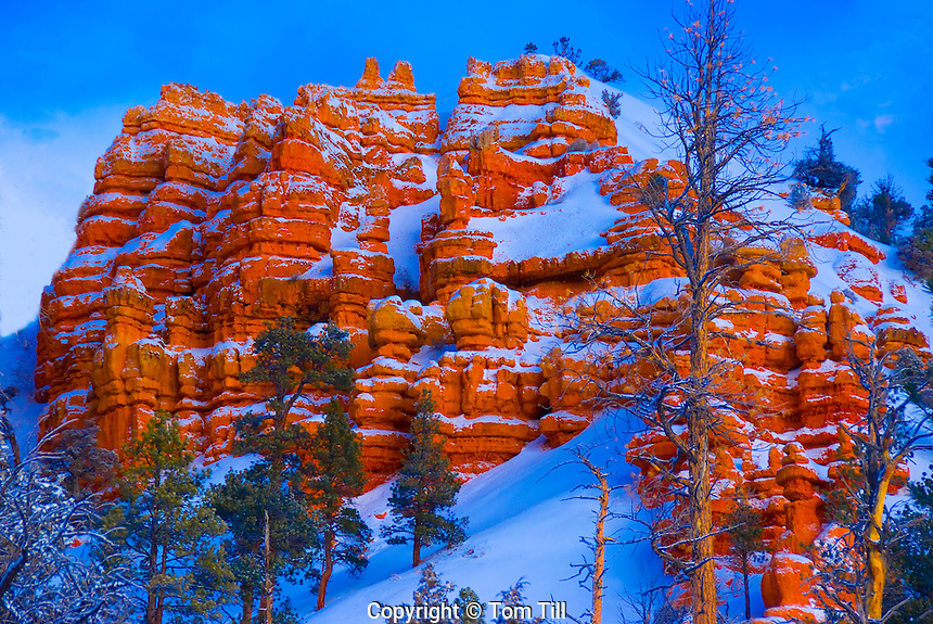 Winter in Red Canyon, Wasatch limestone , Near Bryce Canyon, Dixie National Forest, Utah