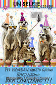 Isabella, CHILDREN BOOKS, BIRTHDAY, GEBURTSTAG, CUMPLEAÑOS, paintings+++++,ITKE055456,#BI#, EVERYDAY ,funny