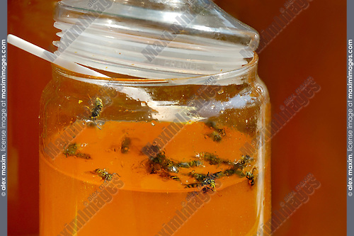 Bees trapped in jar with honey