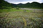 Orchid Island (蘭嶼), Taiwan -- Taro field.