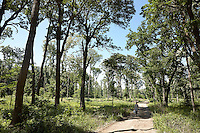 FOREST_LOCATION_90095