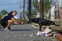 Pasados Safe Haven volunteer Jen Crotzer from Vail, CO, tries to coax a dog towards her as animal rescue efforts continue after Hurricane Katrina struck New Orleans on September 15, 2005.  © Karen Ducey