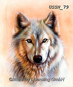 Sandi, REALISTIC ANIMALS, REALISTISCHE TIERE, ANIMALES REALISTICOS, paintings+++++,USSN79,#a#, EVERYDAY ,wolf,wolves ,wolf,wolves ,puzzles