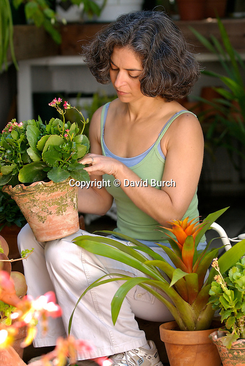 Mature woman in greenhouse, potting plant