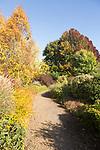 Path through trees autumn foliage leaf colour, near Framfield House, Woodbridge, Suffolk, England, UK