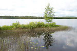 Lentiira Lake, Kuhmo, Finland, medium-sized lake