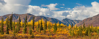 Autumn foliage in the Alaska Range mountains, Interior, Alaska.