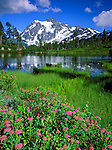 Mount Baker-Snoqualmie National Forest, WA<br /> Pink flowering Subalpine Spirea (Spirea densiflora) on the shoreline of Picture Lake with Mount Shuksan in the distance
