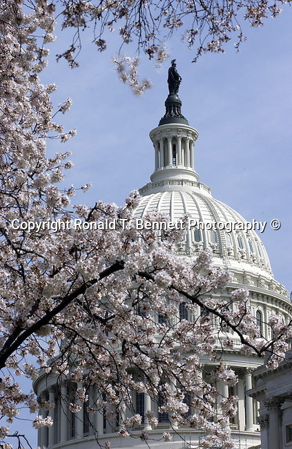 "US Capitol cherry blossoms Washington DC,  United States Capitol Washington D.C., United States Capitol and legislature, Federal government of the United States of America Washington D.C., National Mall, Capitol Hill, Capitol, Capital, quadrants of the District, East and West side of the Capitol 'fronts,"" East side of Capitol side to arrive for visitors, American Neoclassicism, Architect William Thornton, United States Constitution ratification 1789, L'Enfant, surrounding area of Washington DC, US Capitol, Capitol, United States Congress, Washington, D.C. fine art photography by Ron Bennett (c). Copyright, Washington DC, Politics in the United States, Presidential, Federal Republic, united States Congress, Fine Art Photography by Ron Bennett, Fine Art, Fine Art photo, Art Photography,"