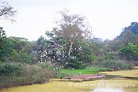 Africa, Swaziland, Malkerns. Milwane Nature Reserve game drive, birds.