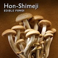 Hon-Shimeji mushrooms | Fresh Hon-Shimeji Food Pictures, Photos & Images