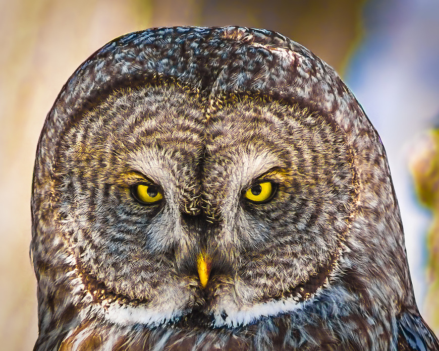 This image won an Honorable Mention Award in the Lucie Foundation's 11th Annual International Photography Awards in October, 2013. It was selected from among more than 18,000 entries from 104 countries.<br />