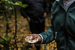 Julia Schelkunova holds a russula, one of the less desirable varieties of edible mushrooms, found in the forest on Saturday, August 24, 2013 in Suzdal, Russia.