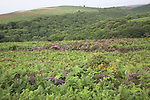 Upland scenery of the Quantock Hills, Somerset, England