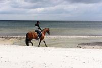 Reiter am Strand von Balka auf der Insel Bornholm, D&auml;nemark, Europa<br /> rider, beach at Balka, Isle of Bornholm Denmark