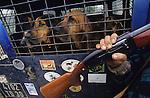 Hunting wild boar, France