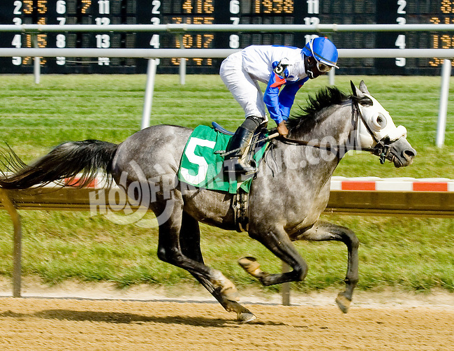 RB Brilliant at Delaware Park on 6/16/12
