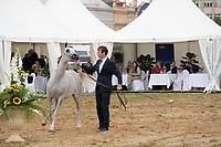 D Feddah, Arabian Horse in the showring with handler, at Prague Intercup - International Arabian Horse Show, september 2017