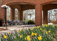 Daffodils at McCool Hall.<br /> (photo by Mitch Phillips / &copy; Mississippi State University)