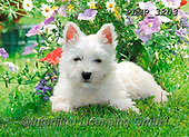 Marek, ANIMALS, REALISTISCHE TIERE, ANIMALES REALISTICOS, dogs, photos+++++,PLMP3203,#a#, EVERYDAY