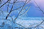 ice covered trees, Lake Superior, winter, pastels