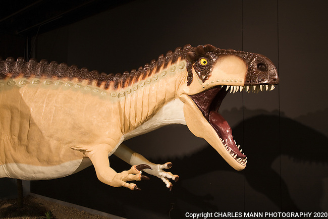 Acrocanthosaurus was the most vicious killer of all the Jurassic dinosaurs that roamd eastern New Mexico and a full sized model can be seen at the Tucumcari Dinosaur Museum in Tucumcari, New Mexico.