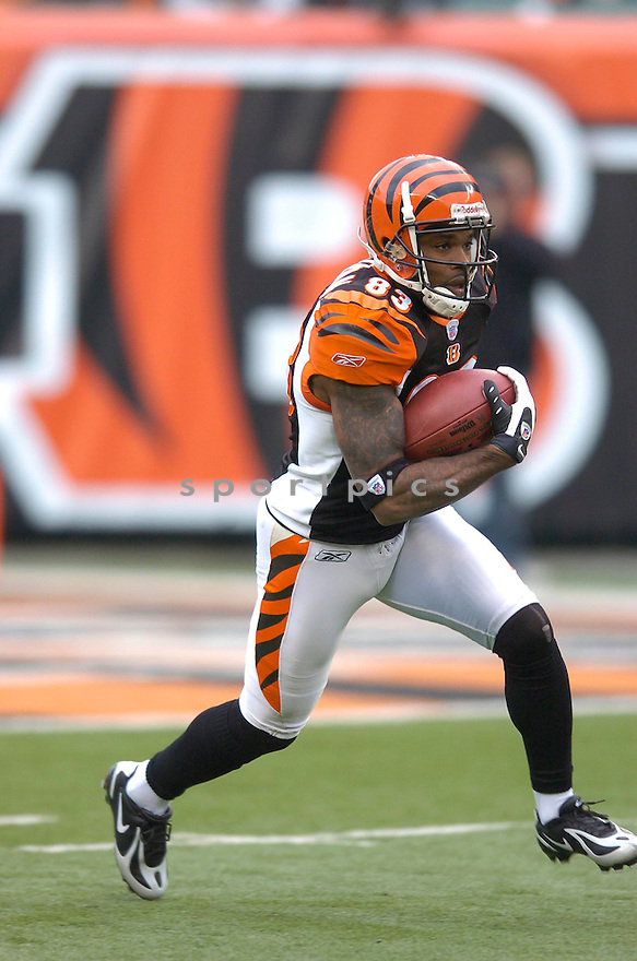 ANTONIO CHAPMAN, of the Cincinnati Bengals, in action during their game against the Arizona Cardinals on November 18, 2007 in Cincinnati, Ohio...Cardinals win 35-27..SportPics
