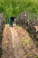 working the soil in the vineyard chateau d'yquem sauternes bordeaux france