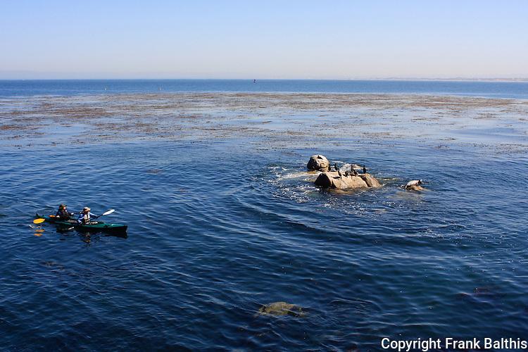 sea kayaking Monterey