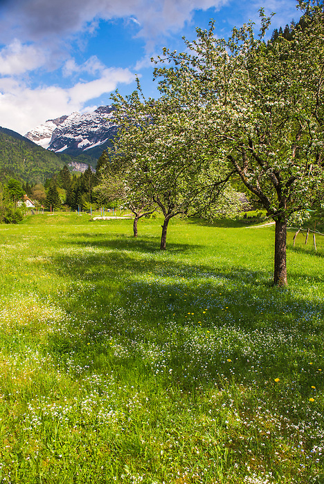 Soca Valley, Slovenia. Julian Alps, seen from Soca Valley in Triglav National Park, Julian Alps, Slovenia, Europe