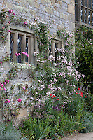 Exterior facade of Haddon Hall with climbing roses