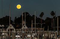 The Full Beaver Moon, November 13, 2016, the Super moon, flloats over the boats moored at the San Leandro Marina on San Francisco Bay.