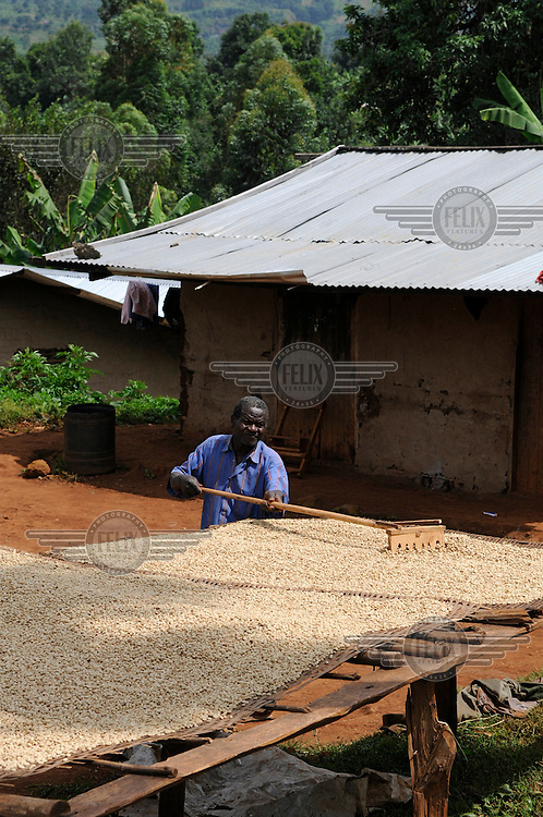 A worker at a coffee processing station in Buginyanya on Mount Elgon where Arabica coffee is produced. Coffee is Uganda's main cash crop but is under threat from rising temperatures and pests all due to climate change.