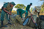 Anti-poaching scouts getting gear ready for deployment, Kafue National Park, Zambia