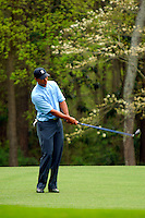 Masters Golf Tournament 2005, Augusta National Georgia, USA. Tiger Woods on playing around with his driver on the 11th fairway, White dogwood.<br /> <br /> Champion 2005 - Tiger Woods <br /> <br /> Note: There is no property release or model release available for this image.
