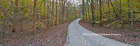 63895-14312 Road through trees in fall at LaRue-Pine Hills, Shawnee National Forest, IL