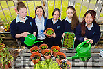"""The 5th year students from Presentation Castleisland  who are through to the national final of """"the one good idea project"""" in Dublin with their project """"greener footprints"""" . Pictured L-r Ciara murphy,Miss Niamh Kelly,Jackie Bonilla,Christina O'Connor and Ayano Ikai"""
