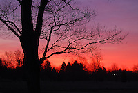 tree silhouetted by purple/pink sunrise.