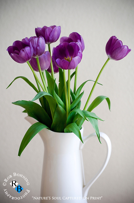 A picture perfect arrangement of purple spring tulips in a white vase