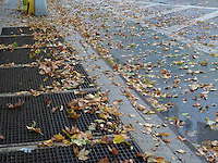 Autumn leaves waiting to be swept up on Eighth Avenue  in the Chelsea neighborhood of New York on Tuesday, November 10, 2015. (© Richard B. Levine)