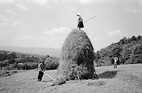ROMANIA / Maramures / Breb / Summer 2002..A couple makes a haystack for the winter in the traditional method once practised all across Europe. The hilly terrain of Maramures prevents the baling of hay with a tractor...© Davin Ellicson / Anzenberger..