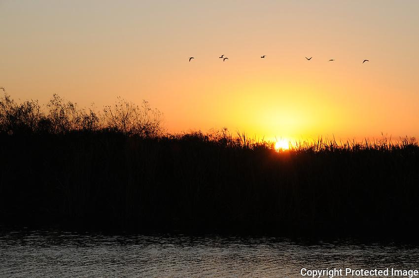 A burst of sunset lights the sky as the sun sets over the Arthur Marshall Loxahatchee Preserve, Boynton Beach, Florida.