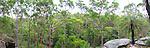 Grass Tree, Brisbane Water National Park, NSW, Australia
