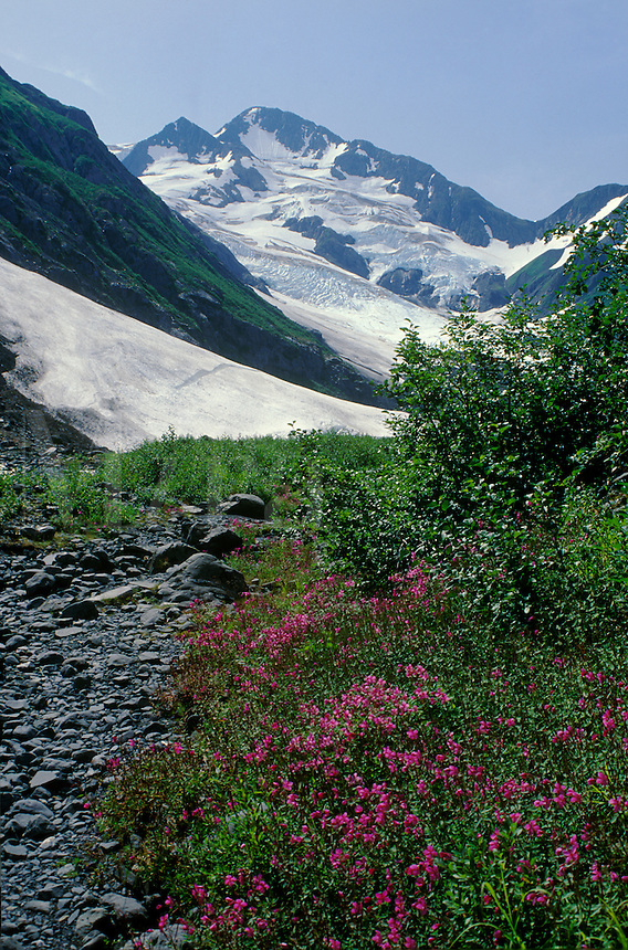 Byron Glacier on the Kenai Peninsula, Alaska. Kenai Peninsula, Alaska, USA