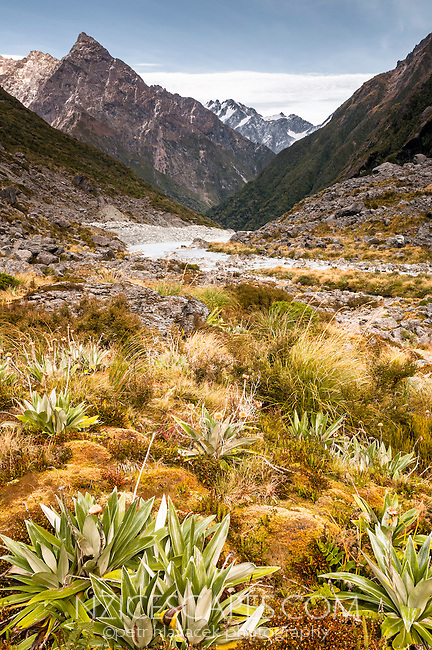 Alpine vegetation and Butler River near Ice Lake, Westland National Park, West Coast, New Zealand
